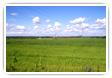 Land / Farm