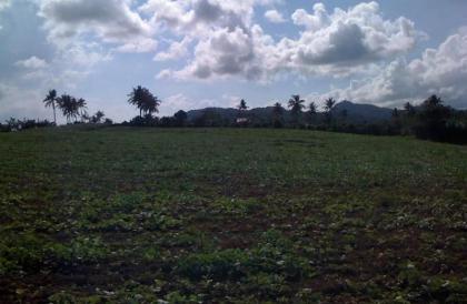 1.5 hectare land in brgy bunggo calamba city
