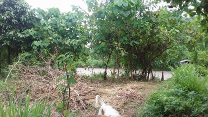 reduced price 240sqm residential lot in calamba, laguna